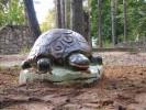 Скульптура - Черепаха (средняя) :: Заказать изготовление скульптур из дерева, Вы можете по телефонам: 8 (495) 783-65-09, 8 (495) 518-64-87